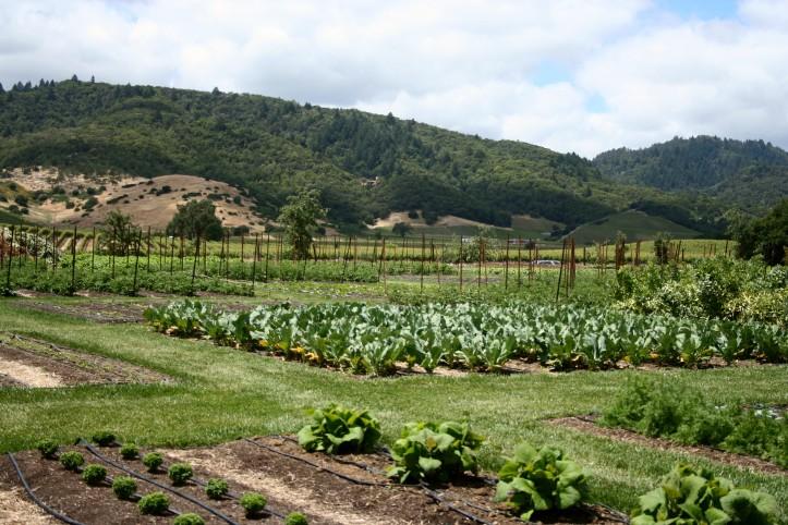 Horta orgânica do chef Thomas Keller, em Yountville