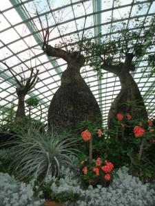 Baobás no Flower Dome