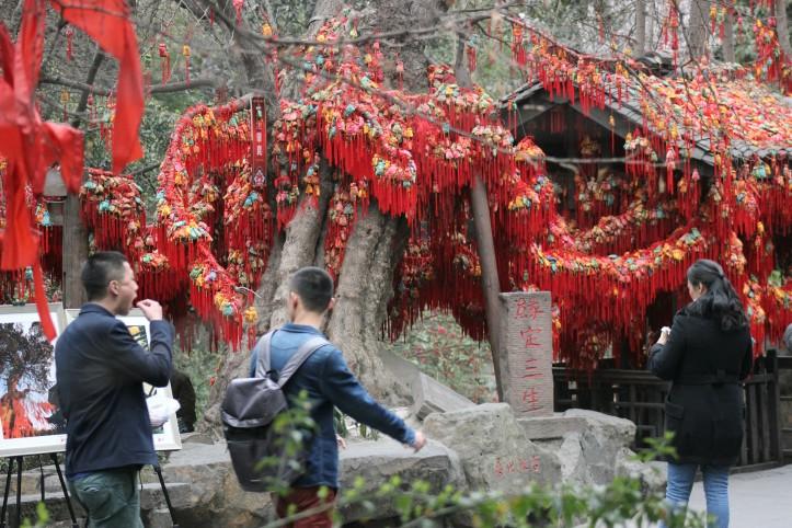 A árvore dos desejos de Jinlin