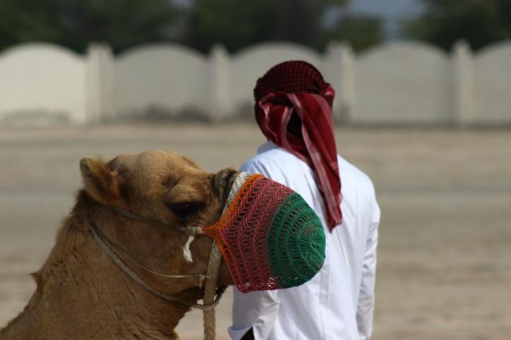 Camelo na parte