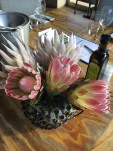Protea em vinícola da Hermanus Wine Route
