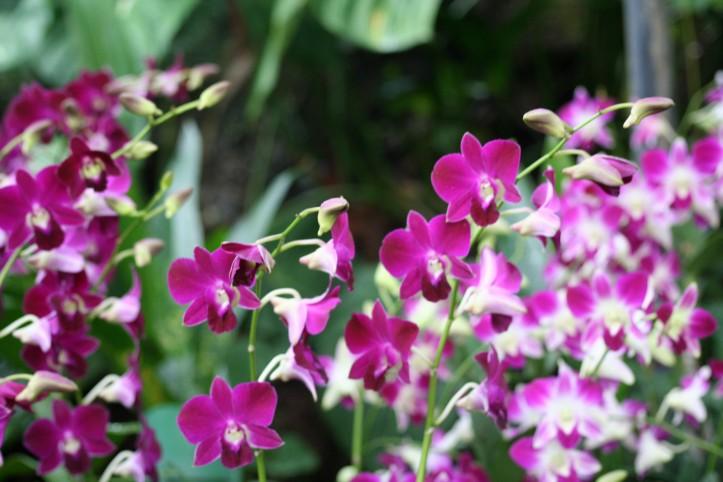 Orquídeas no Jardim Botânico