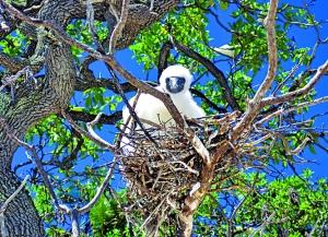 Fauna local na ilha do poderoso chefão / Foto de divulgação